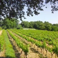 Domaine du Rocher des Dames, vignes