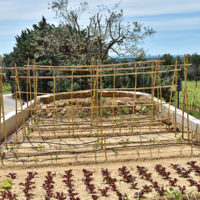 potager, manger local, culture, vegetable garden, local food